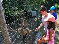 Alimentando al corzo en Negreira