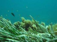 Enjoy underwater flora and fauna