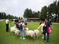 Con las ovejas en la granja escuela