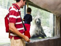 Viendo de cerca al oso pardo