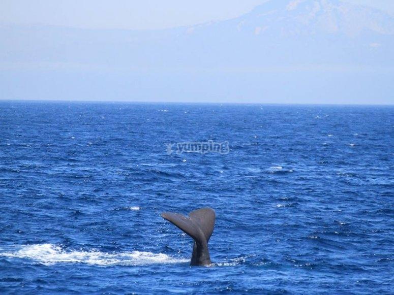 海豚的尾巴伸出
