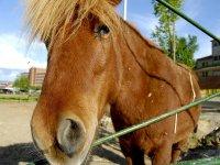 Beautiful and loyal ponies
