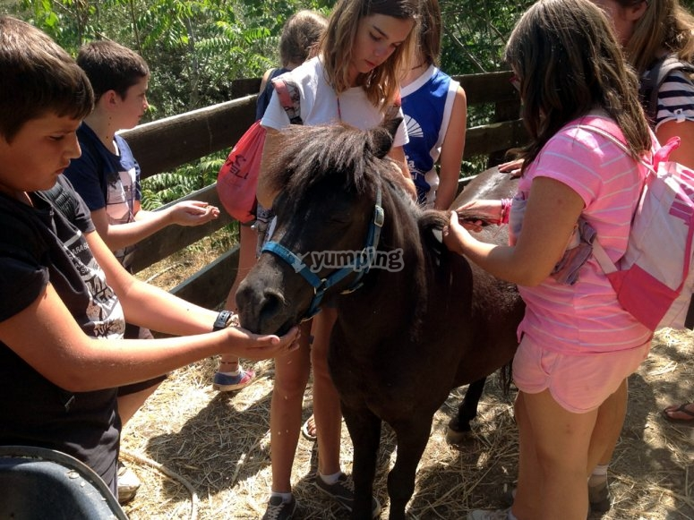 Con nuestro burro