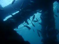 Visita i relitti nelle immersioni