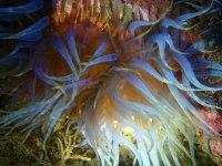 Buceo y observa el mundo submarino