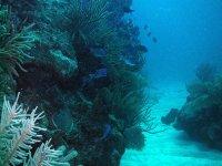 en los fondos marinos