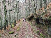 Bosque del Reboldo