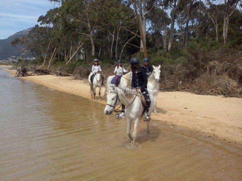 Entrando en la playa con los equinos