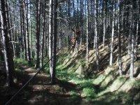 Circuito aéreo entre los árboles
