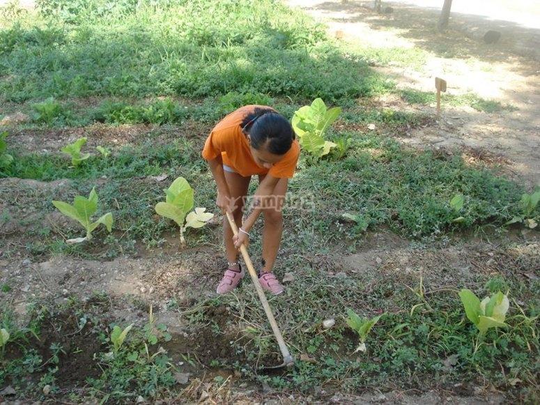Trabajando en el huerto