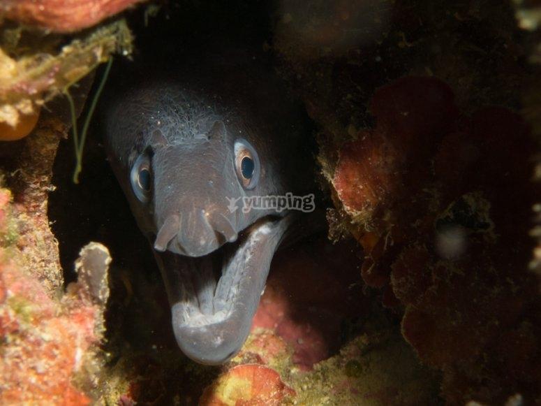Especies durante la inmersión