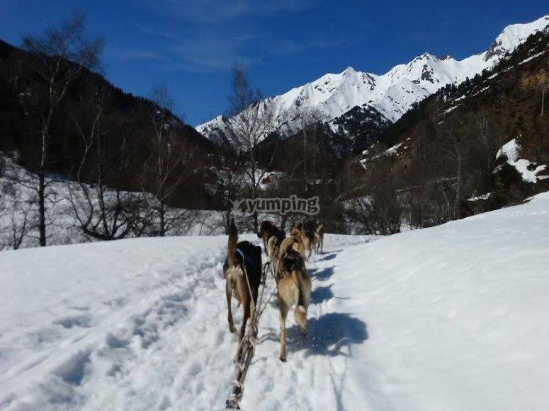Paseo en trineo tirado por perros Andorra