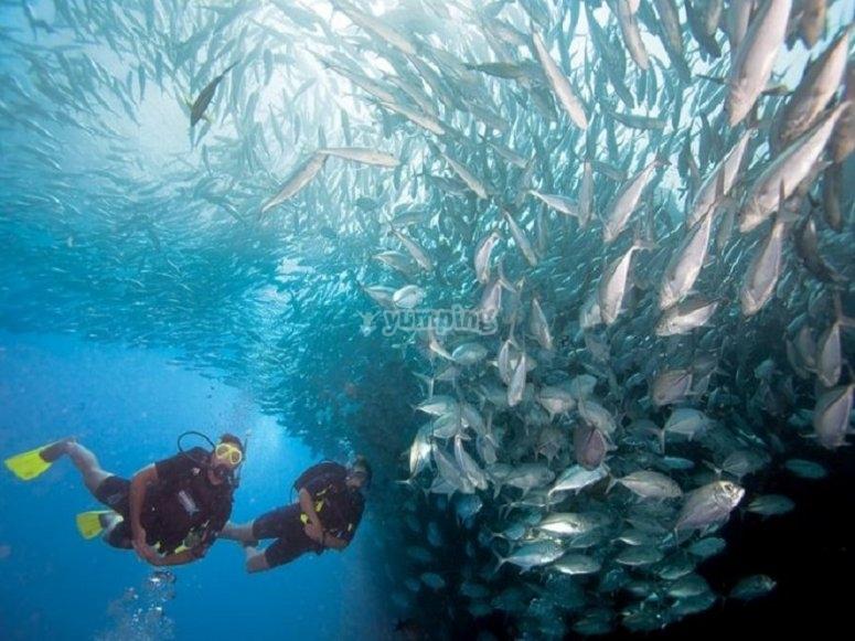 Diving among fish shoals