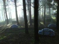 Campo en el bosque