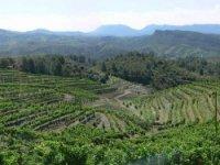 Recorre los más extensos viñedos