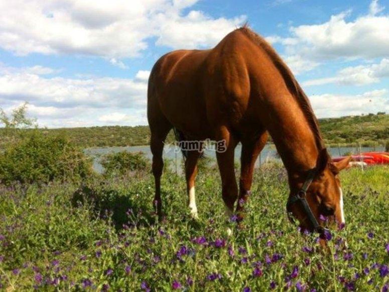 Disfruta de nuestros simpáticos caballos