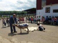 Nuestra fresquita oveja