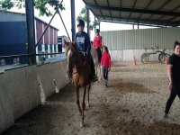 Clases de equitacion en grupo