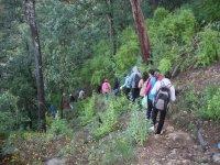 Tour por el bosque