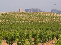 large extensions of vineyards