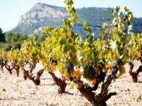 Recorre nuestros viñedos