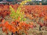 Conoce nuestros viñedos