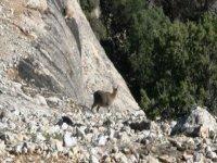 Fauna en Teruel
