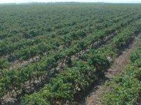 访问我们的葡萄园生产品质的葡萄酒