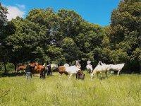 Caballos descansando en la ruta