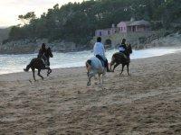Trotando sobre los caballos a orillas del mar