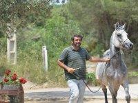 Training the horse