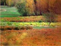 El campo de cultivo
