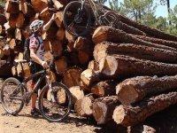 Piruetas entre troncos