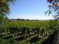 Distintas variedades de uva