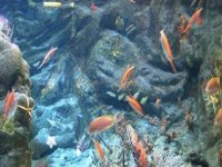 Diversas especies en el acuario