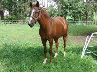 Equine inside the farm