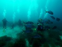 Rodeados de peces