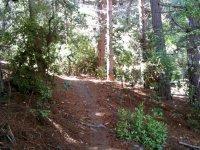 Track between trees