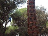 Arbol con presas de escalada en la Juliana