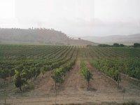 Maravillosos viñedos