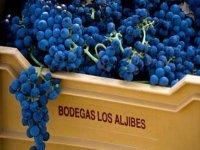 Cultivamos uvas de la mejor calidad