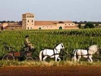 Recorre los viñedos en coche de caballos