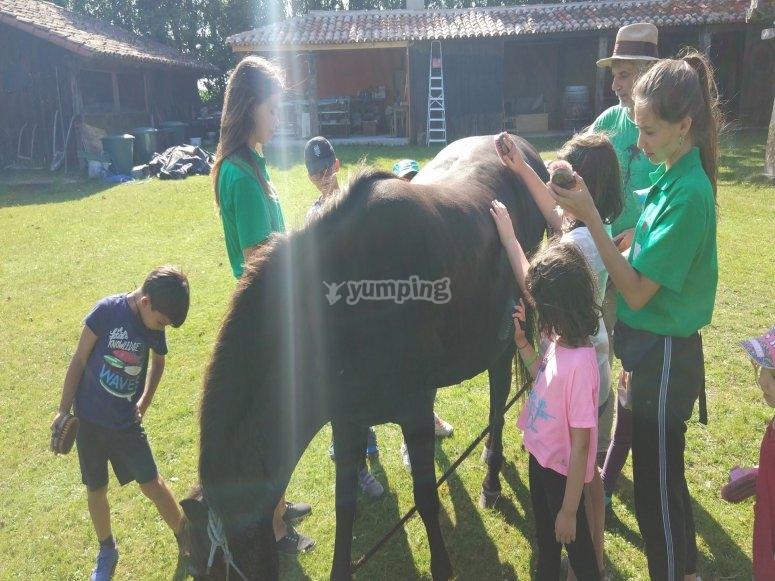 Un pomeriggio a cavallo