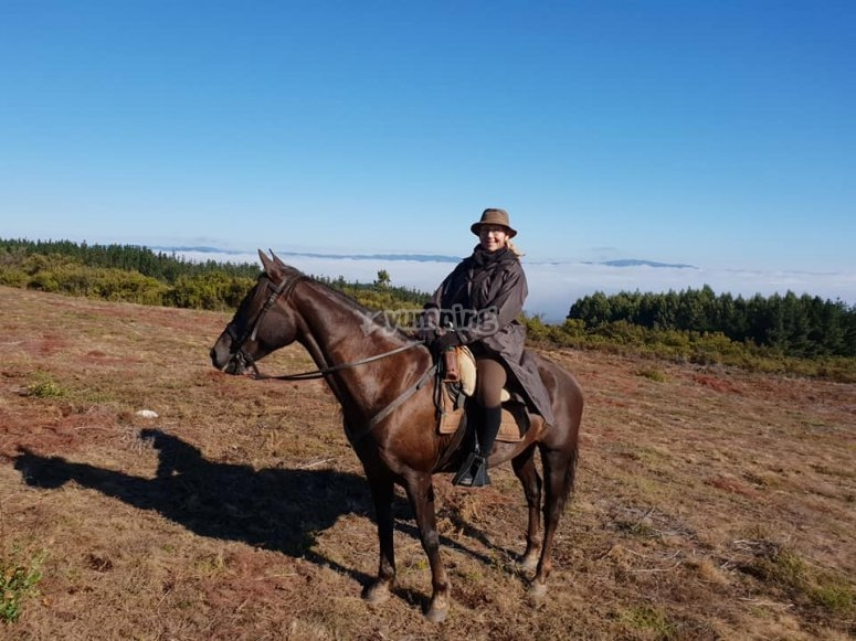 Cavaliere con cavallo marrone