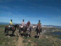 Cavalli in gruppo con cavalieri