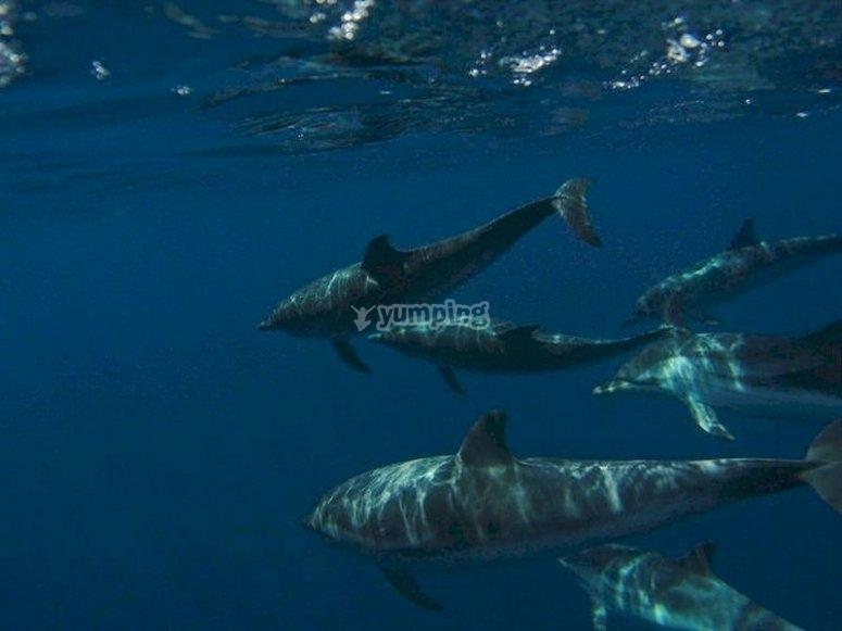 Sal a buscar cetáceos desde Tarifa