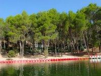 Flota de kayaks delante del bosque
