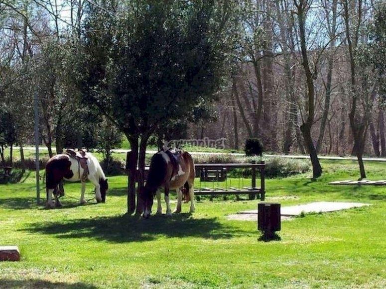 Ruta a caballo en Morella