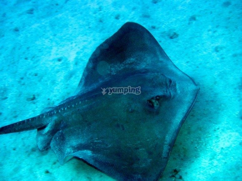 Fauna marina en Tenerife