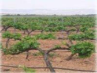 Los viñedos de Bodegas Calar